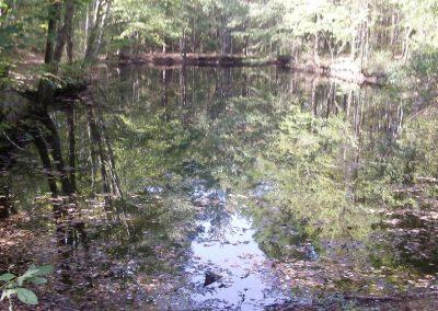 wetlands-area