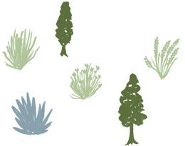 Trees and shrubs illustration