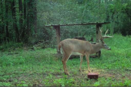 Whitetail Deer and Ani-Logics Ani-Mineral Block