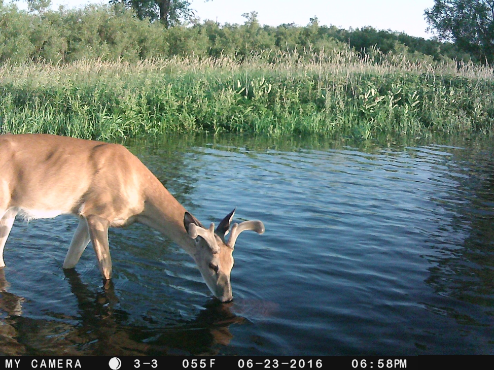Trail Cam Picture 3