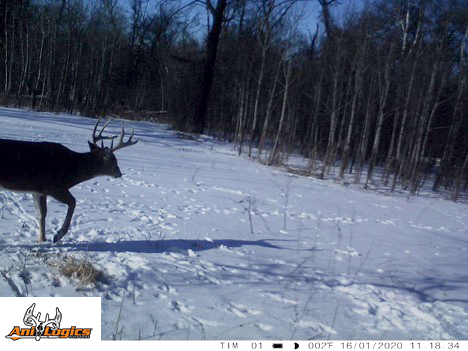 Shed Hunting