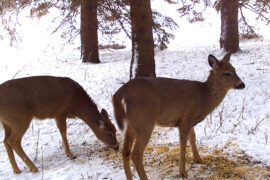 deer supplement snow
