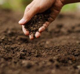soil sample test