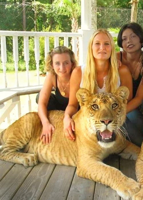 three pretty girls with tiger