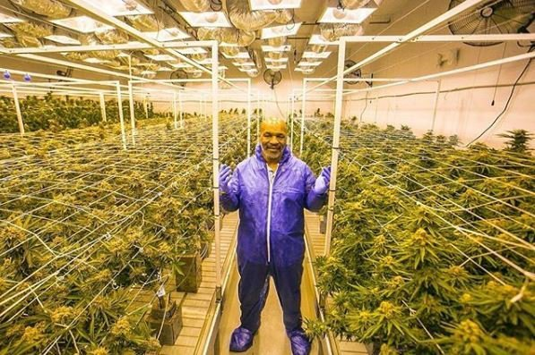 mike tyson cannabis room garden of weed champ