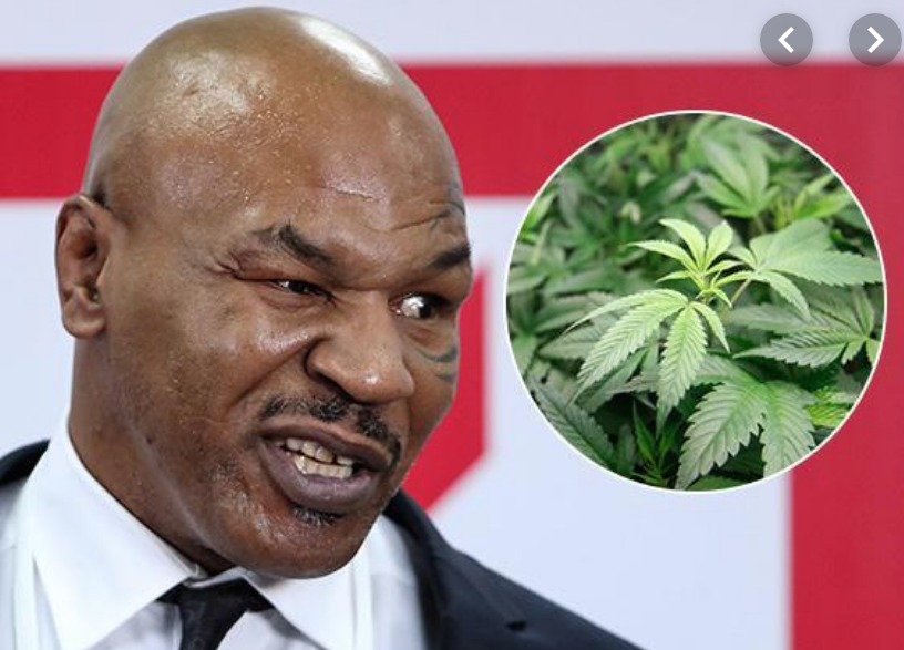 mike tyson $40,000 weed every month lol
