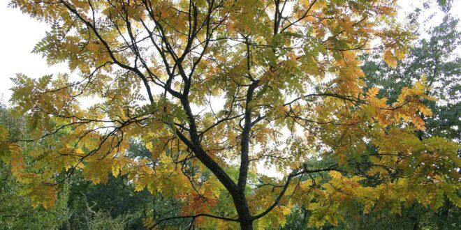 yellow tree in yard