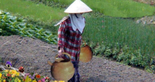 woman carrying 2 pots on a pole