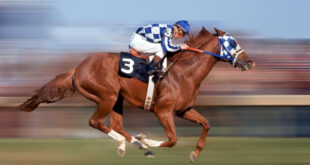 Secretariat proves he's a unique breed