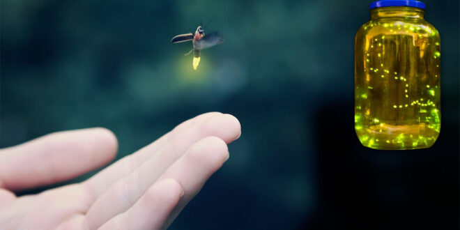 catching fireflys