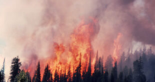 blazing fire in Yellowstone National Park