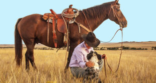 cowboy with his dog and horse