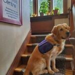 Monet – our Facility Dog!