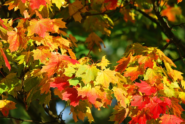 Cleansing with the Seasons – Autumn