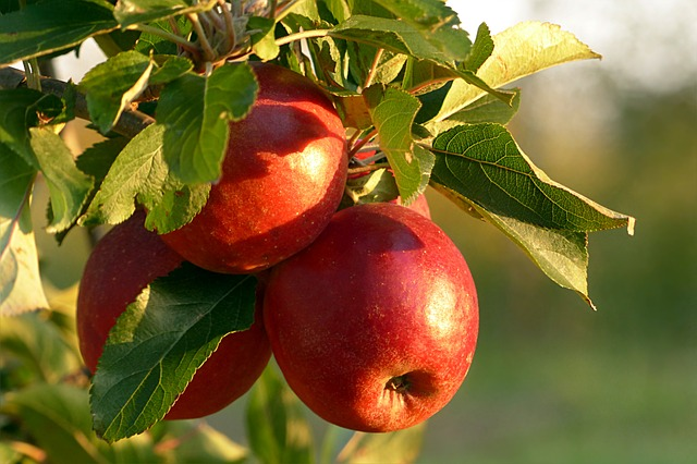 Antioxidants Role in Health – Part 4:  Red Phytonutrients