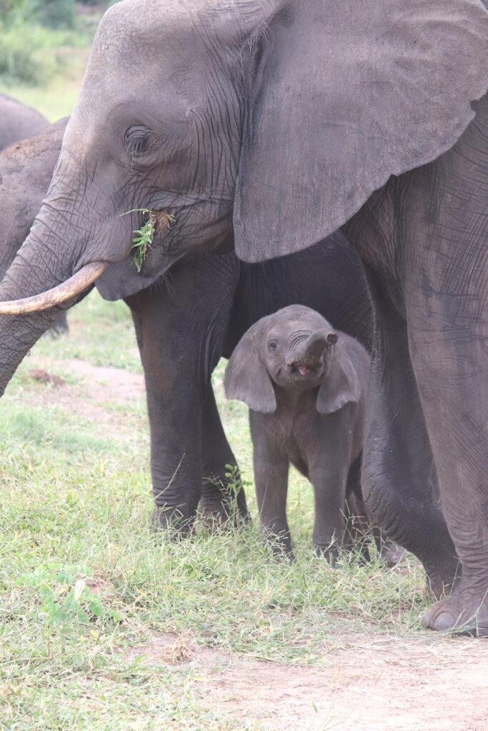 Baby and mother elephant 2_Chobe National Park_Botswana_Credit Katrina Holden