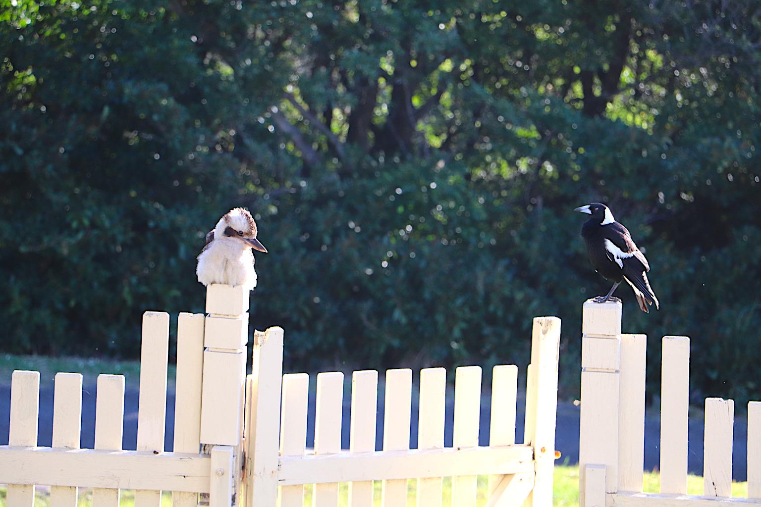 Q Station_birds_vintage travel kat