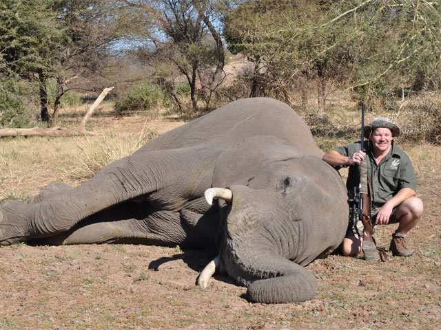 Elephant, 375 Wby, 300gr Solid Brass, 18 yards, broadside shot.