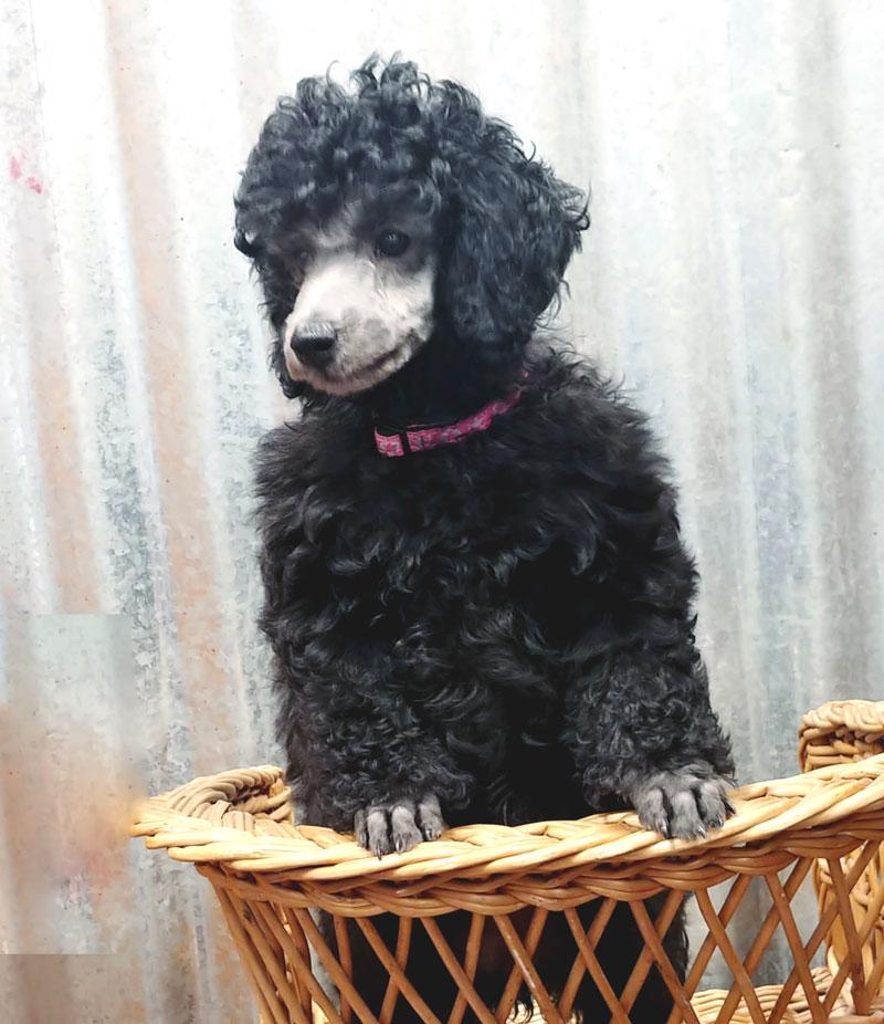 New Pups 2019