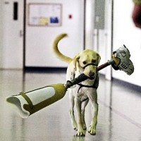 Dog carrying leg
