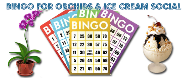 Annual Bingo & Ice Cream Social