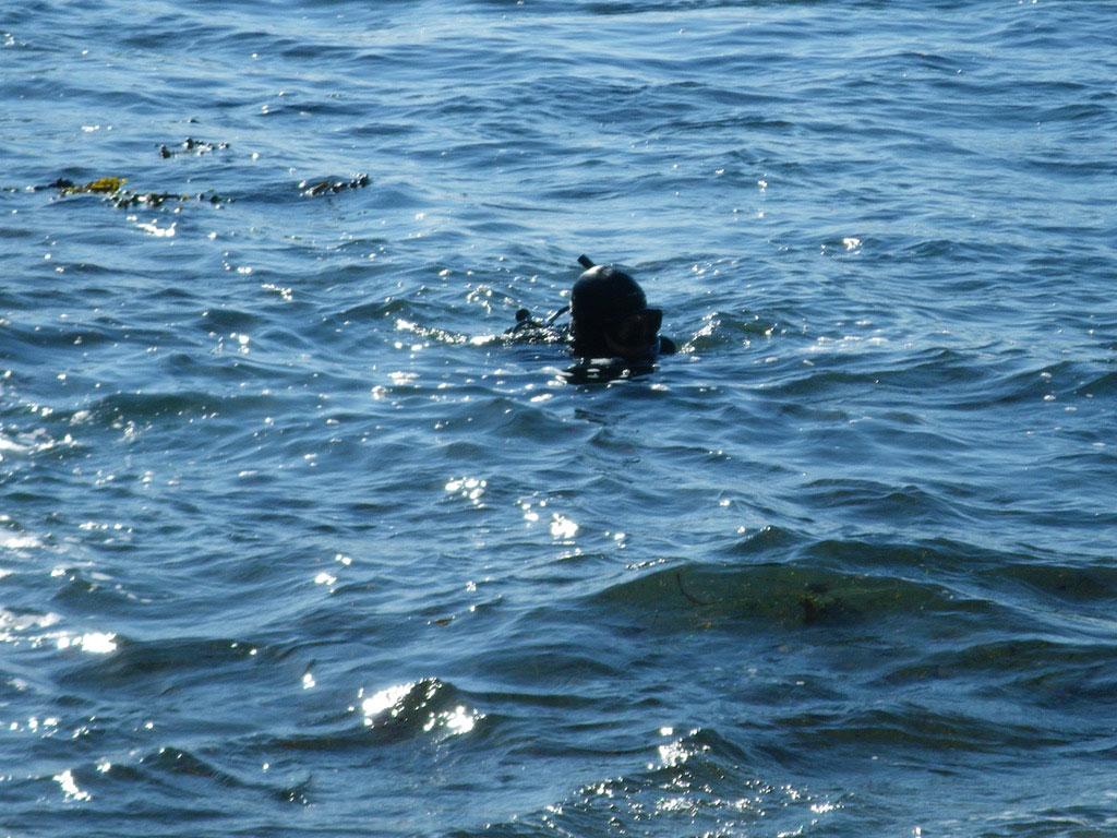 Justin Barrett Jade Diver, Jade Diving, Big Sur