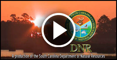 dnr boat video
