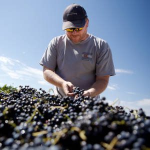 Mark Beres, Flying Leap Vineyards