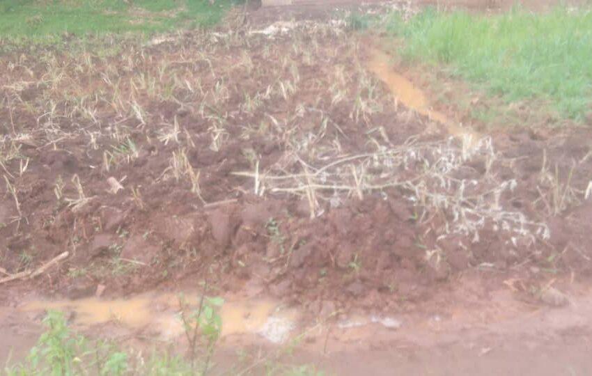 Rusizi: Abahinga igishanga cya Cyunyu bacibwa amafaranga y'ubukode atagira 'inyemezabwishyu'