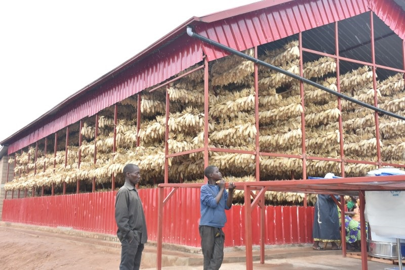 Kirehe: Abubatse ubwanikiro bw'ibigori i Gahara amezi abaye 3 batarishyurwa