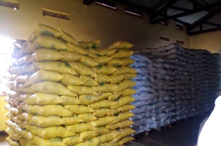 Ngoma: Abahinga umuceri barataka ubukene kubera toni 700 zabuze isoko