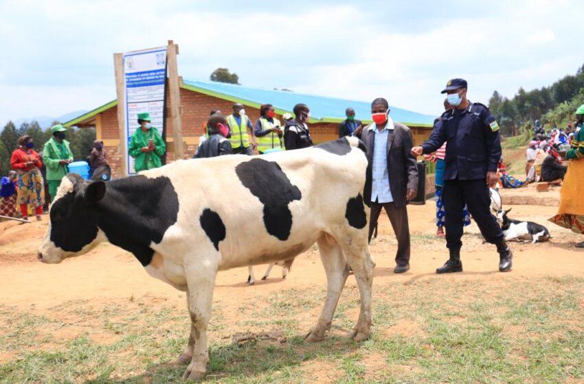 Nyamagabe: Abagabweho igitero kikanyaga bamwe bahawe amatungo arimo imfizi bari bakeneye