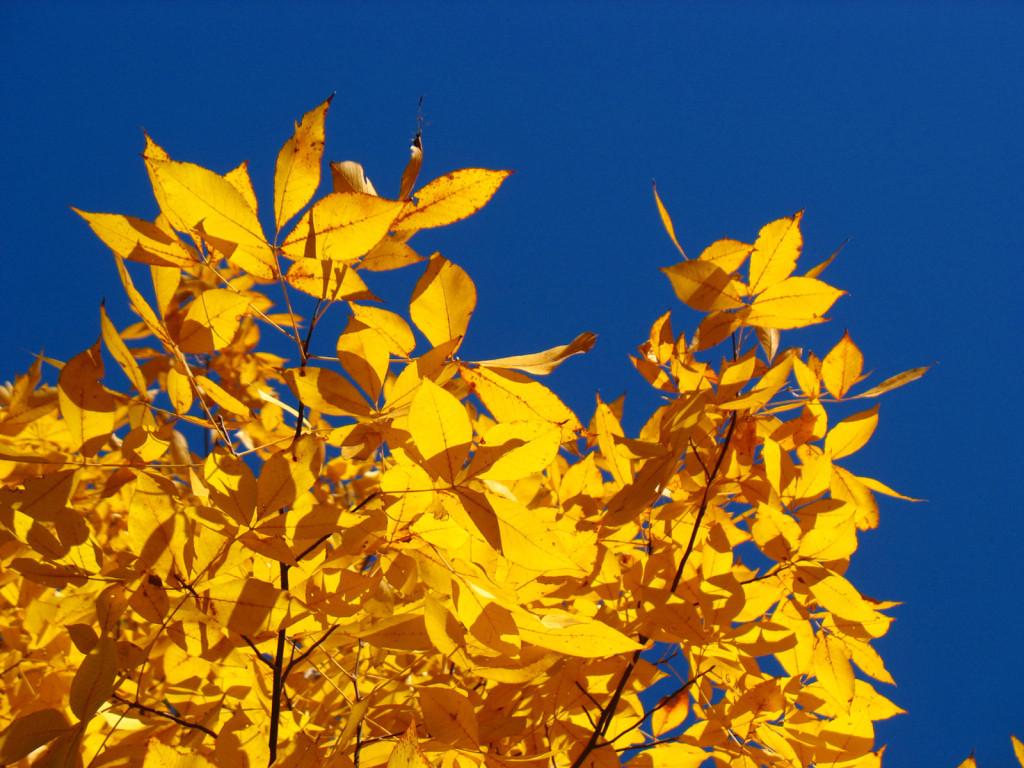 Autumn foliage. Photo © Ben Young Landis.