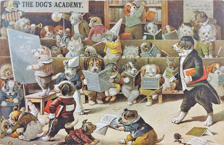 The Dog's Academy.