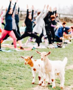 Baby Goat Yoga at Greenhill Winery and Vineyards @ Greenhill Winery and Vineyards |  |  |