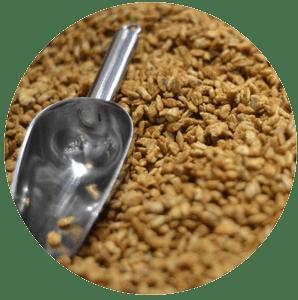 Spoiled Grain