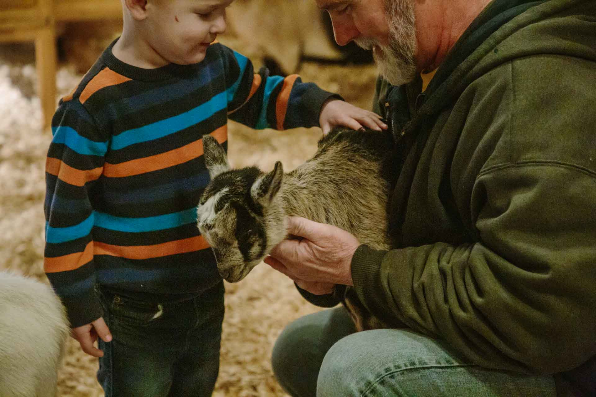 Petting Zoo - Pygmy Goat at Country Roads in Missouri