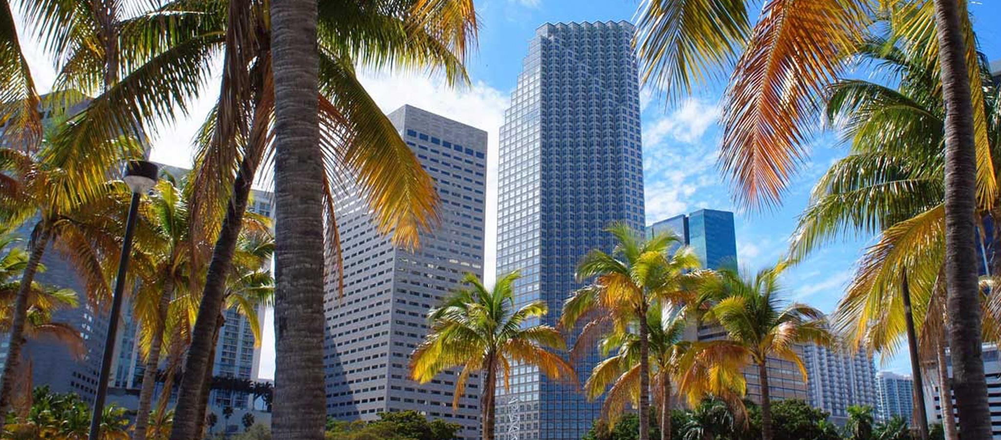 Miami Dife