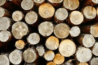firewood 2.jpg