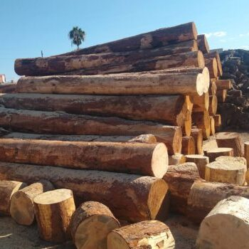 pine-vegas-poles-1a-3-570x350