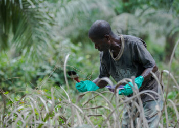 Although smallholder farmers contribute significantly to the country's agriculture sector, they remain among the most economically vulnerable