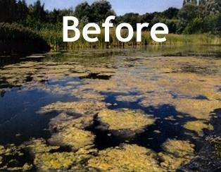 pond algae treatment Myrtle Beach