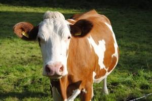 Food Supply - livestock