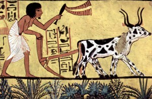 Agriculture In Ancient Civilization