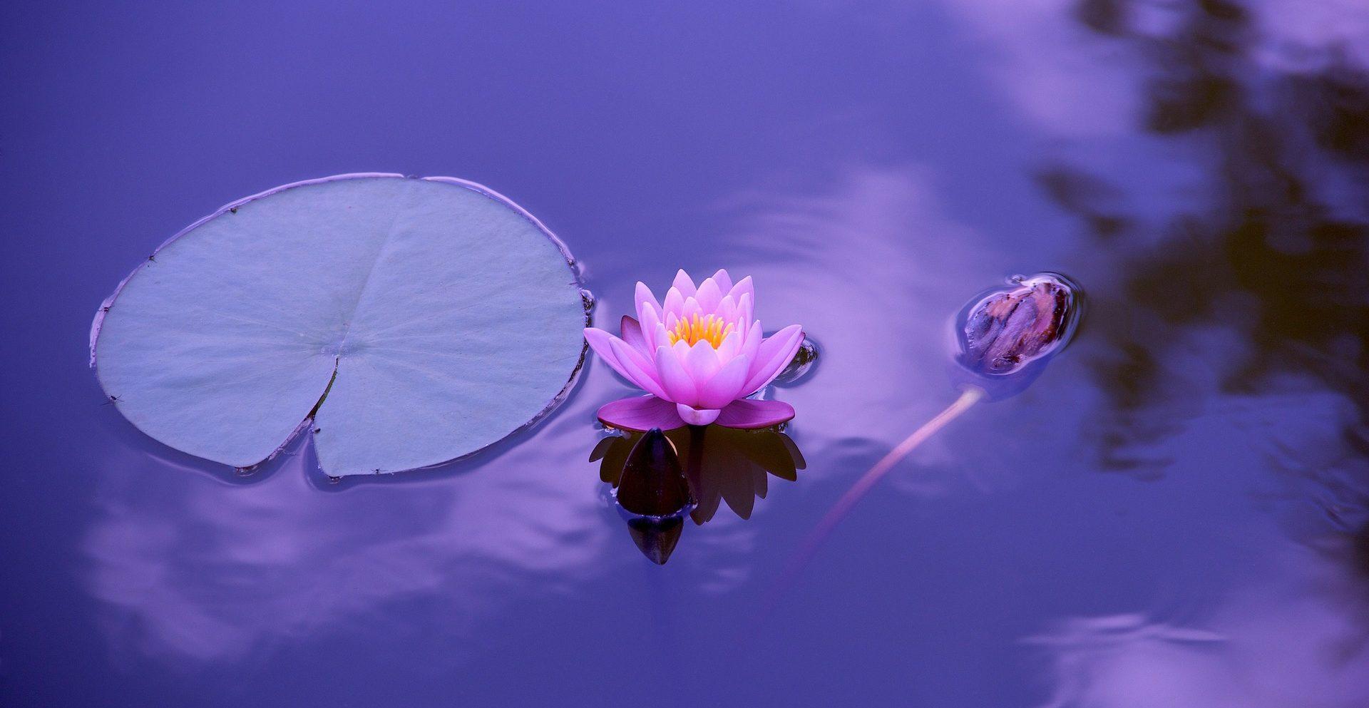 balance-wholeness-healthy