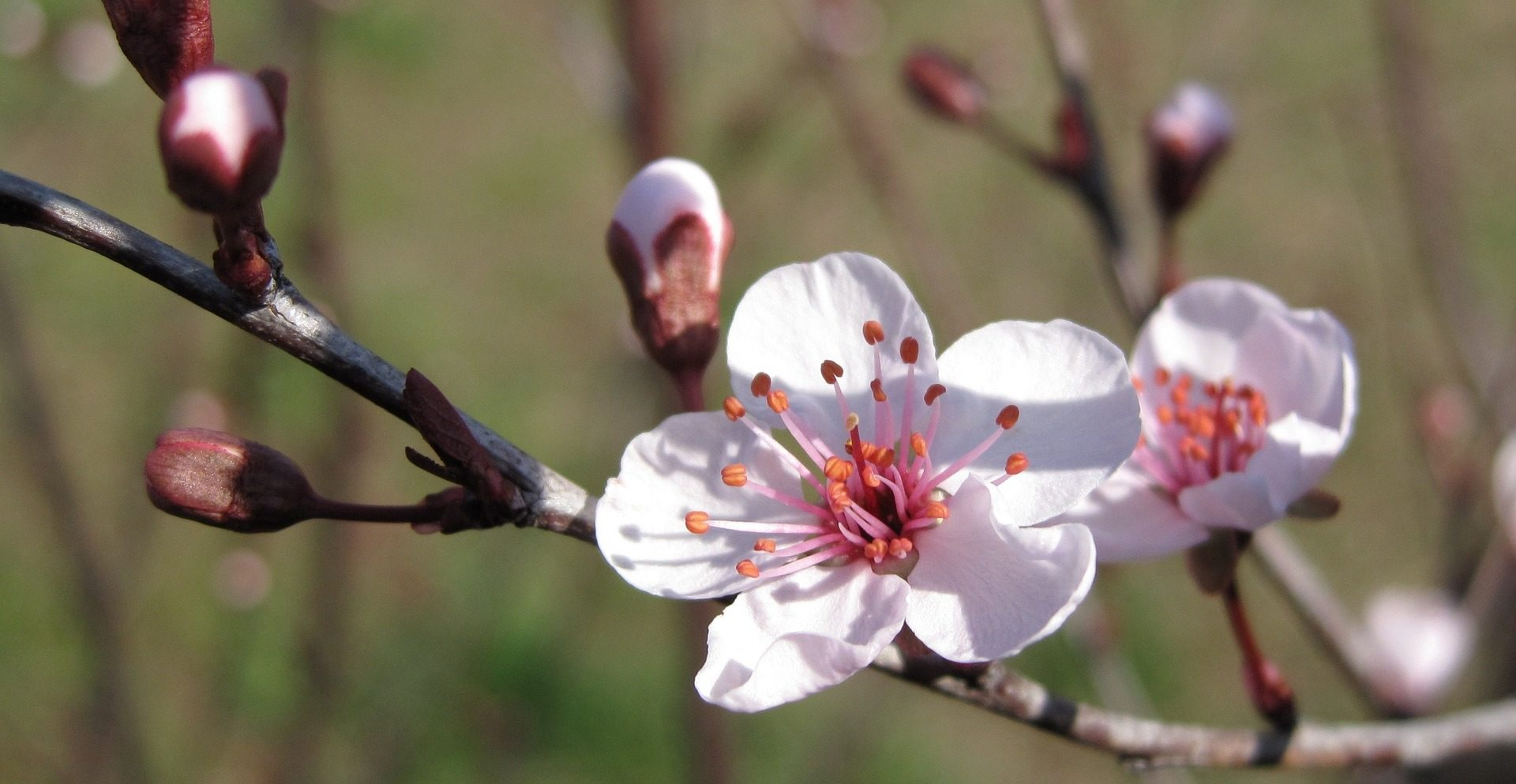 Bach Flower Essences