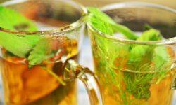 Antibacterial Herbs