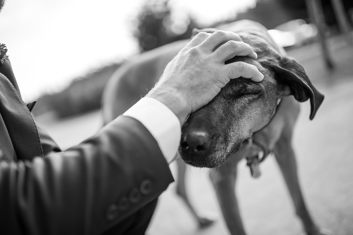 Black and white photo of dog pet by groom