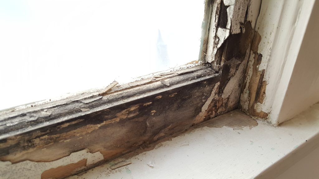 peeled paint and black mold on lower sash