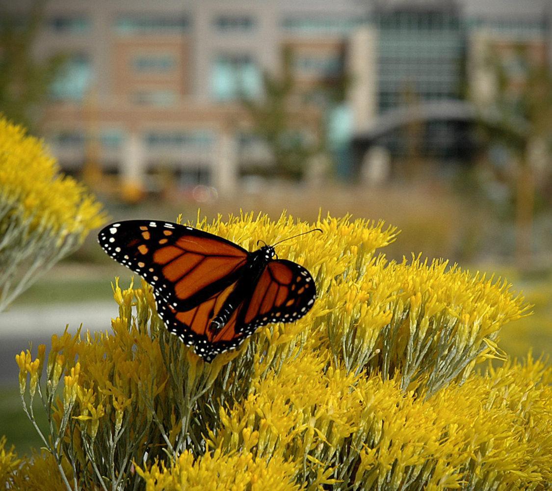 Medical Center of The Rockies - Native Landscape